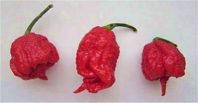 8 Ounce Dried Carolina Reaper Pods